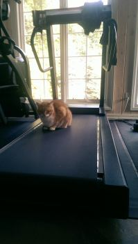 You don't ACTUALLY use a treadmill. You sit there.