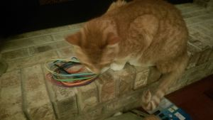 I'm going to chew up your new hair bands, and I don't give a damn what you think. #thegrinch #olliestolechristmas #meow